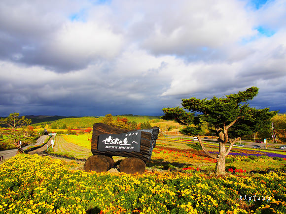 [北海道 美瑛] – 美瑛 ぜるぶの丘 亞斗夢之丘 @ 北海道の花名所,漂亮的花園景