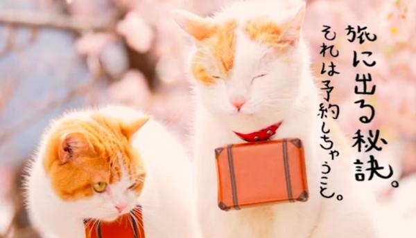 [新聞]  貓奴尖叫了!日本旅遊網站「貓咪套房」 四處肉球萌爆